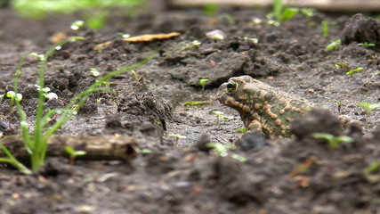 Toad jumps out of view