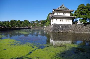 皇居のお堀とコケ