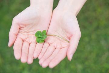 四つ葉のクローバーを持つ手