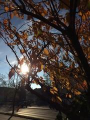 Sonne scheint durch Laubbaum