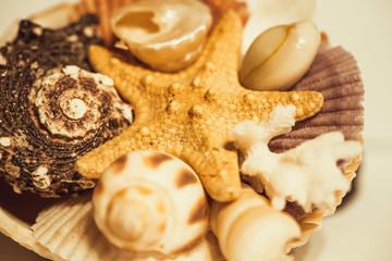 Starfish, seashells isolated on white background