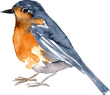 Fototapety watercolor drawing bird