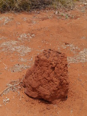 Termite mound in the Northern territory in Australia