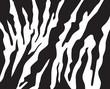 zebra stripes pattern background vector