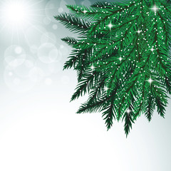 Fir tree branches and snowflakes on colorful background.