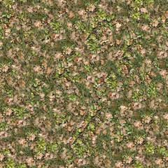 Grass Surface of Oak Grove.