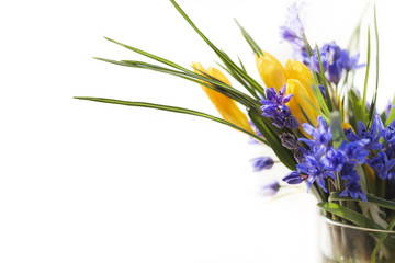 First spring flowers in a vase