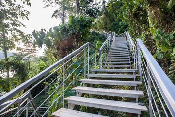 Steps un to the rainforest