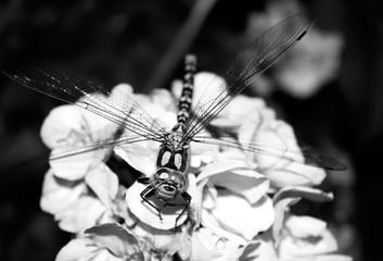 Dragonfly, damselfly on a flower in garden.