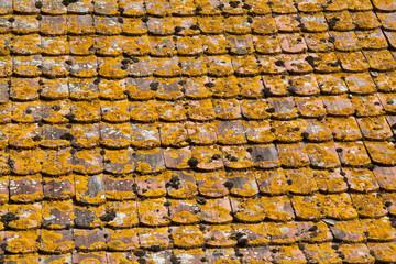 Couverture de tuiles de bois recouverte de mousse, Ingersheim