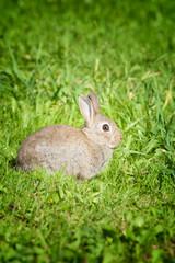 A scared bunny rabbit