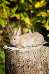 A cute bunny rabbit sitting on a tree stump