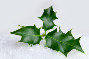 Christmas holly leaf  in the snow