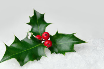 Christmas holly leaf with red berries in the snow