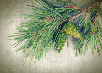 Christmas tree branches on vintage background
