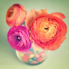 Pink and orange colorful ranunculus in a vase decorated by a swe