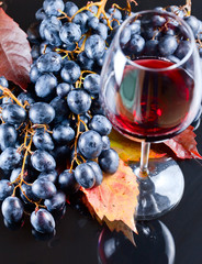 grape and red wine