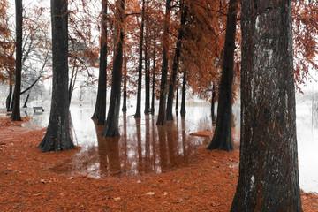 Varese Lake, overflow in the public park Zanzi
