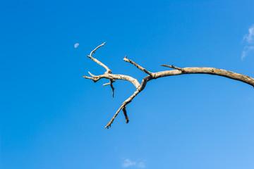 dead branch tree under blue sky