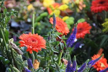 Bunte Blumen auf dem Friedhof