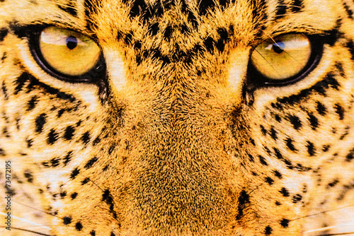 Foto op Aluminium Panter texture of close up print fabric stripes leopard