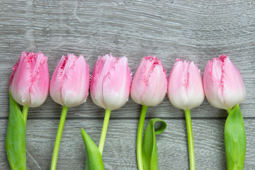 six tulips on a row