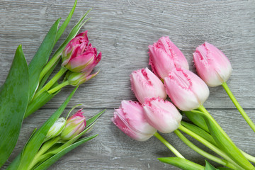 bunch of soft pink tulips