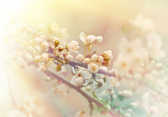 Beautiful budding and flowering