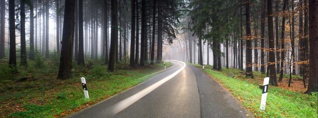Straßenverkehr im Wald bei Nebel