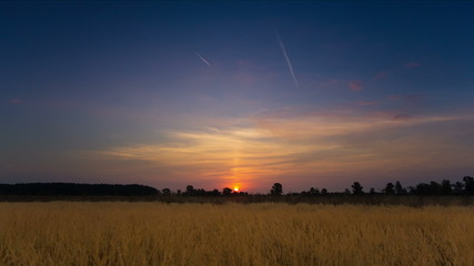 The wheat (cereal) field and sunset background