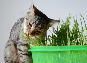 kitten and grass