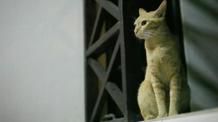 Cat in the night at window. HD. 1920x1080