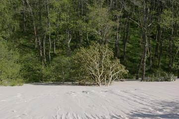 Wanderdüne vor dem Wald