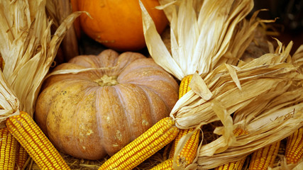 autumn holiday pumpkin and corn, thanks giving