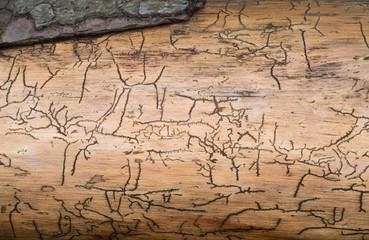 Muster unter der Rinde eines Baumes