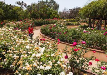 Walking in a rose garden