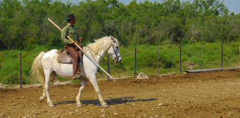 Gardian en Camargue.