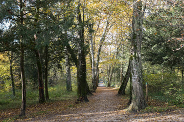 un automne une forêt