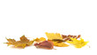 A group of autumn leaves on a white background