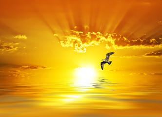 amanecer radiante sobre el mar calmado