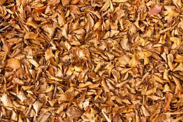 Autumn leafs