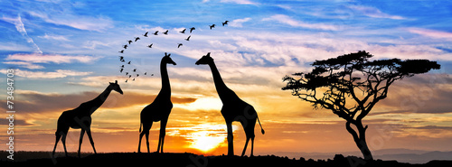 Fotobehang Giraffe safari por el atardecer de africa
