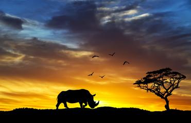 el rinoceronte que si iba a dormir