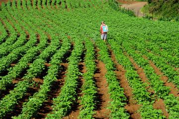Île de la Réunion - Pesticides