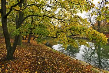 Autumn landscape in South Sweden.
