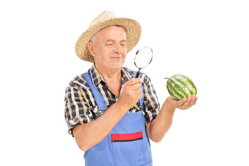 Mature farmer inspecting a small watermelon