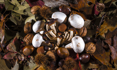 Autumnal still life composition with mushrooms