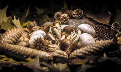 Autumnal still life composition
