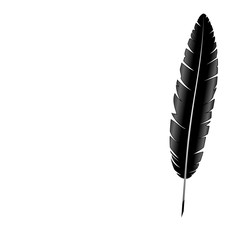 Black single feather isolated on white background