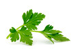 parsley isolated on white - 73495136